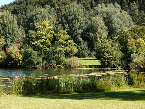Lauchertsee umgeben von Büschen und Bäumen auf der Schwäbischen Alb