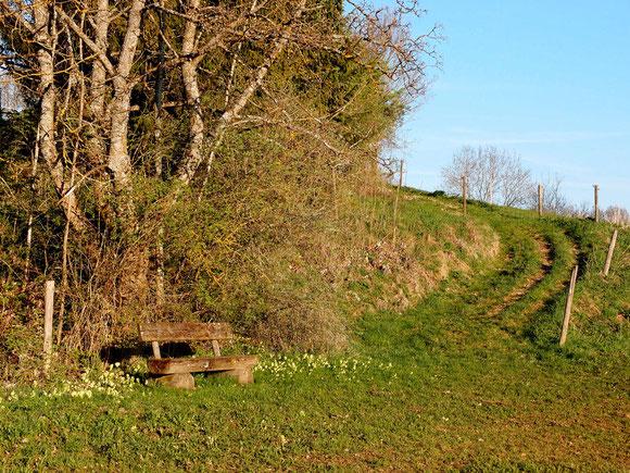 Einsame Bank in den Wiesen von Sonnenbühl-Genkingen, Schwäbische Alb