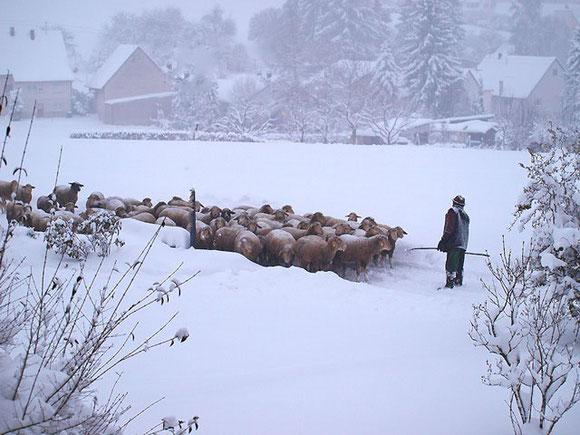 Schäfer mit seinen Schafen im Winter in St. Johann auf der Schwäbischen Alb