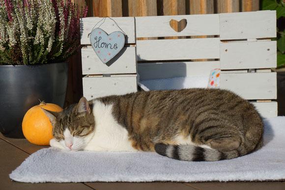 Katze Kasi auf der Piupet Decke