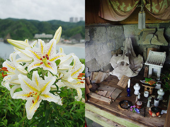 鵜原理想郷の景勝地のひとつ「黄昏の丘」でヤマユリを観察した後は、鯨の骨が祀られる大杉神社へ