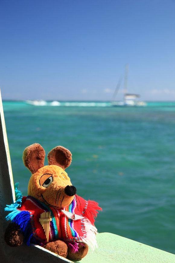 Maus sichert sich gleich den sonnigsten Platz auf der Fähre, um noch einmal das karibische Meer sehen zu können.