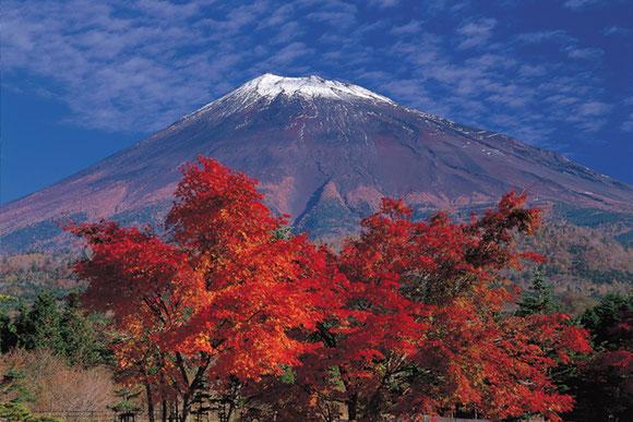 (写真は裾野市西臼塚からの富士山と紅葉:【写真提供】静岡県観光協会)
