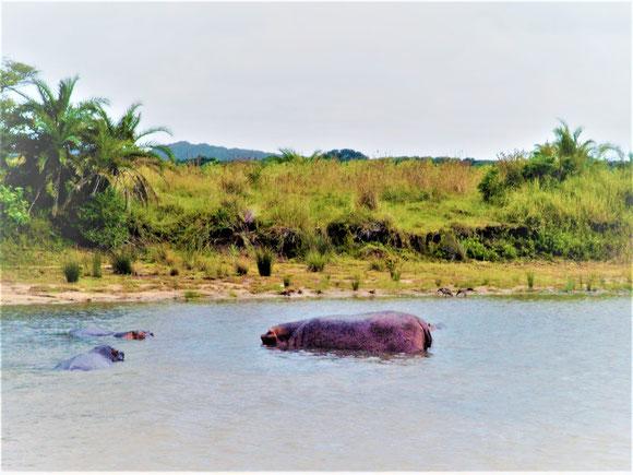 Krüger Nationalpark selbstfahren: Tiere beobachten am Wasserloch