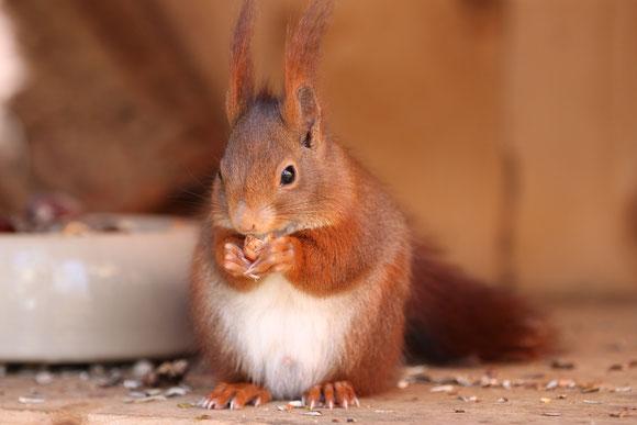 Eichhörnchen Spenden Geschenke Weihnachten Baby Aufzucht