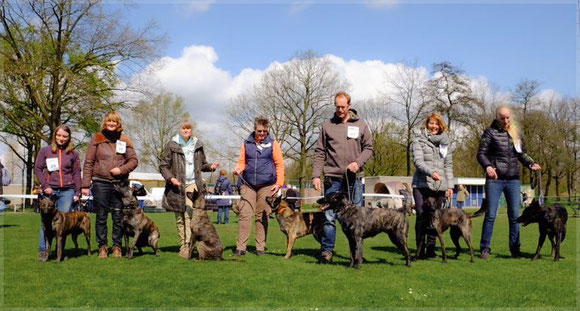 16 april 2016 with 5 puppies, mum Bobbie and dad Lex we went to the litterday of the Nederlandse  Herdershonden Club (NHC)
