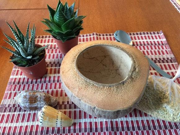 Kokosnuss, Schale, Sukkulenten, Zebra-Haworthie, Schneckenhäuser, Ziersteine, Löffel