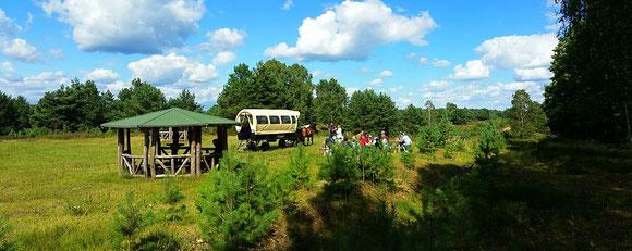 Kyritz Ruppiner Heide im August