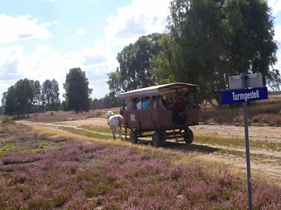 mit Planwagen die Wittstock-Ruppiner Heide entdecken