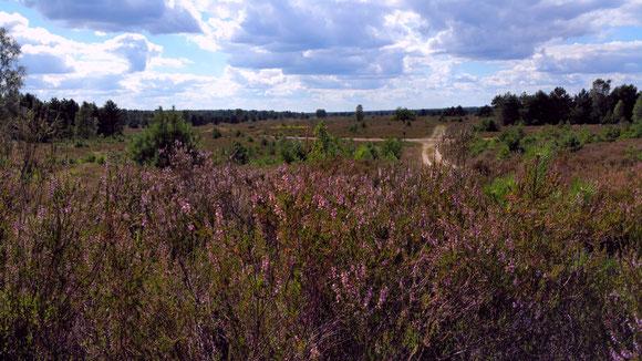 HeideFahrten mit Kutschenkarsten