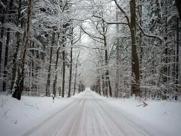 im Winterwald mit Kutschenkarsten unterwegs