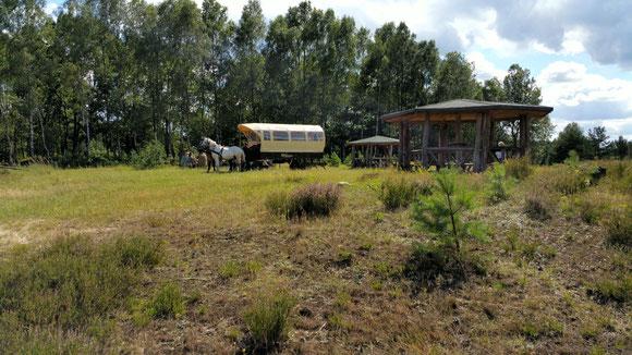 Die Wittstock-Ruppiner Heide mit Kutschenkarsten entdecken