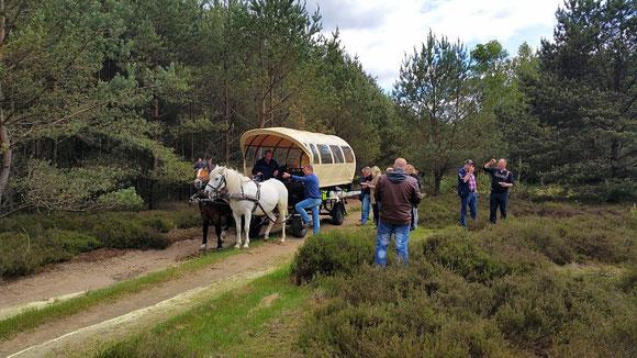 die Wittstocker Heide mit Kutschenkarsten erleben