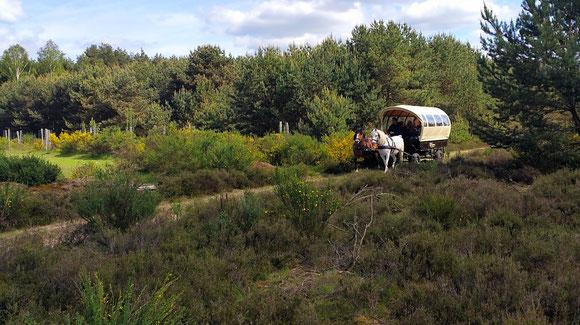 Heidetouren mit Kutschenkarsten