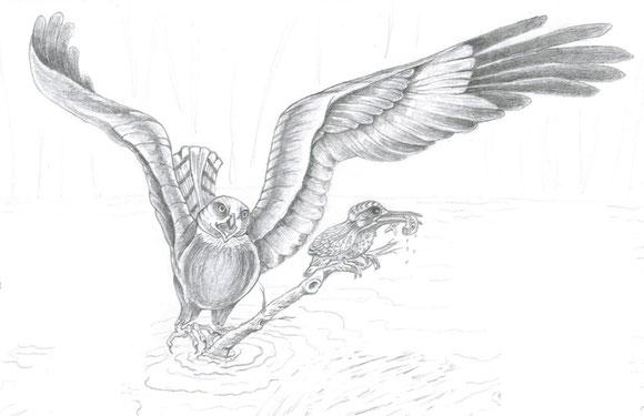Le busard des roseaux