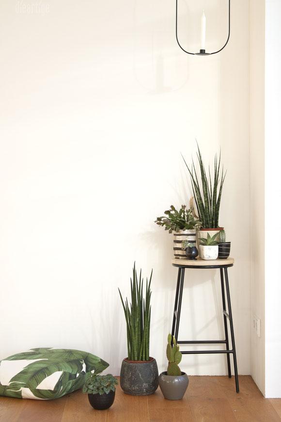 dieartigeBLOG - Dekoration mit Grünpflanzen | Bogenhanf, Kakteeen, Sukkulenten