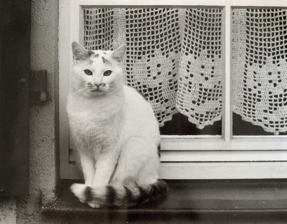 "Thema: ""Tier"" Foto: Hartmut Kullmann"