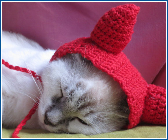 white cat, crocheting, cat hat