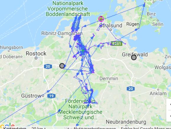 Hugoline fühlt sich in Vorpommern wohl und ist sehr aktiv unterwegs.