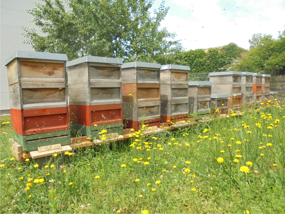 Unsere Bienenvölker, Imkerei  Rastatt Malsch
