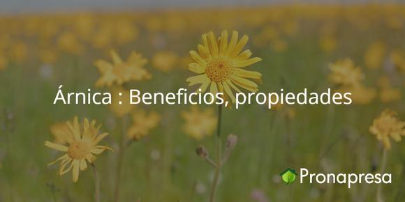Árnica: Beneficios, propiedades