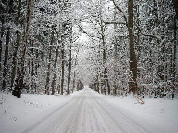 mit dem Schlitten durch den Winterwald
