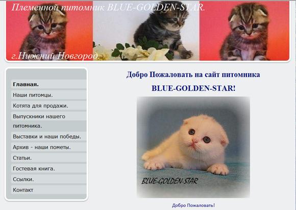 """Сайт кошек: Скоттиш-Фолд: """" Блю-Голден-Стар"""""""