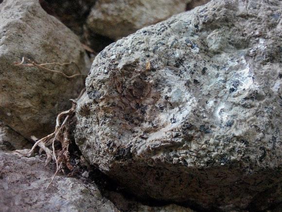 Sanidinite ritrovata incastonata in un muretto a secco a Tre Croci, frazione di Vetralla