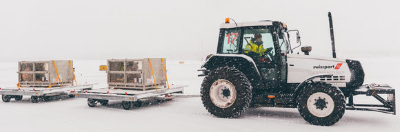Snow-loving pandas should feel  comfortable in Finland  -  courtesy: Swissport