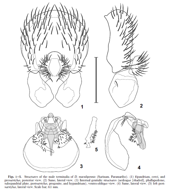 Mathis and Zatwarnicki 2005. Revision of New World Species of Shore Fly Genus Discomyza Meigen(Diptera Ephydridae)Ann. Entomol. Soc. Am. 98(4) 431-443