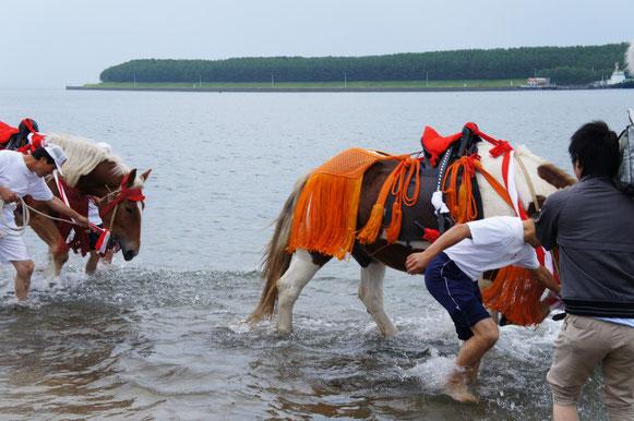 潮で身を清める様子。馬も冷たそう。奥に見えるのは志布志石油基地