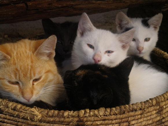 Die neue Katzenpopulation :Mio,Miutz,Wuscherle,Fu Hu und Fu Long