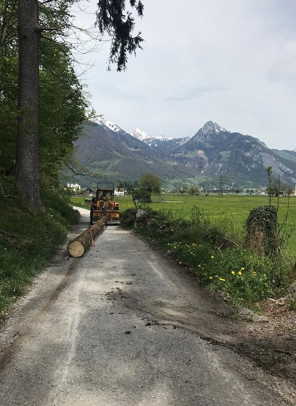 Trämmel wurden früher mit Pferden geschleift, heute mit Traktor.