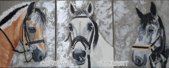 Pferdeporträts: Köpfe von einem Braunen, weissen und grauen Pferd.