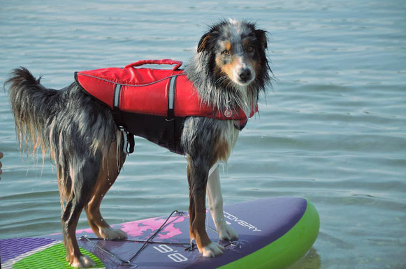 canipaddle, paddle, chien, dog, proprioception
