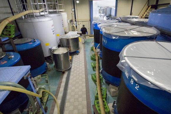醪担当としての仕事場がここ。「醪は全工程の集合体。どんな麹や酛だったのか、醪の発酵経過を見るとある程度わかります」と亮太さん。