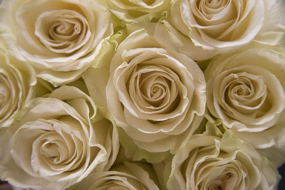 une cargaison de roses blanches les unes à côté des autres