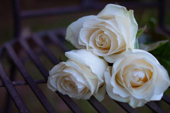 3 roses blanches couchée, têtes sur la gauche, posées sur une grille en fer