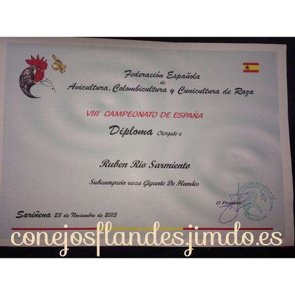 Subcampeonato de España del conejo gigante de flandes 2013. Sariñena