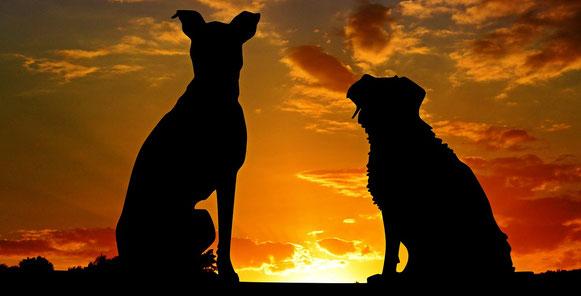 Hundehalstuch mit Namen