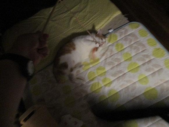 ちゃんたくん 猫 ねこ ネコ にゃんこ 猫ちゃん 暗闇 大田区 ペットシッター キャットシッター
