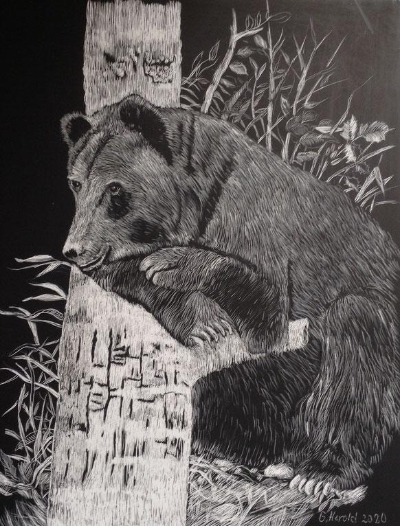 Srcatchtechnik: Goliath der Bär