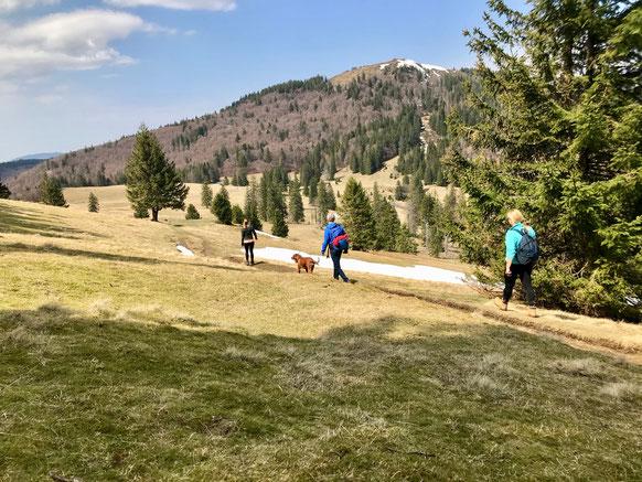 Wanderer mit Hund durch Schneefelder in Schwarzwald