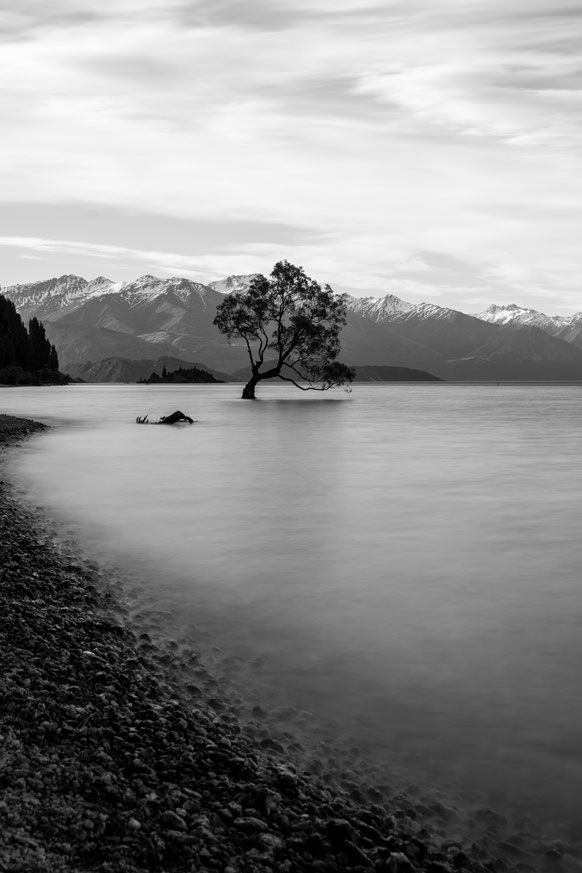 Long exposure of the Wanaka tree in New Zealand