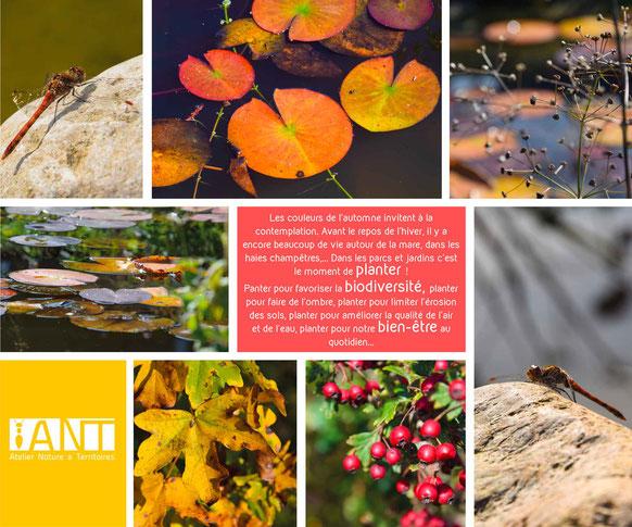 biodiversité, jardin naturel, bien-être, cadre de vie, prairie naturelle, pédagogie, sensibilisation