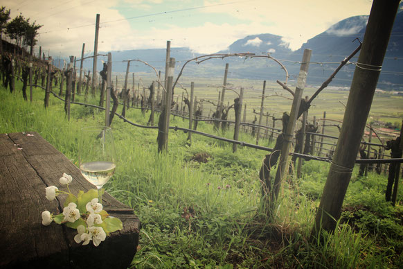 Weinanbau Südtirol Weinschmeckeria