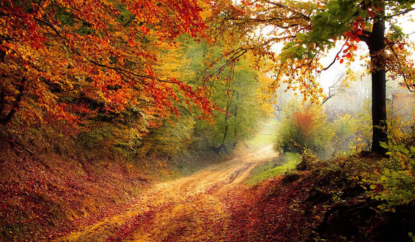 autumn_a_magic_of_nature_painter's_blog