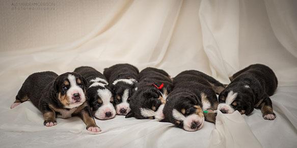 Все малыши ждут своих любящих мам и пап !