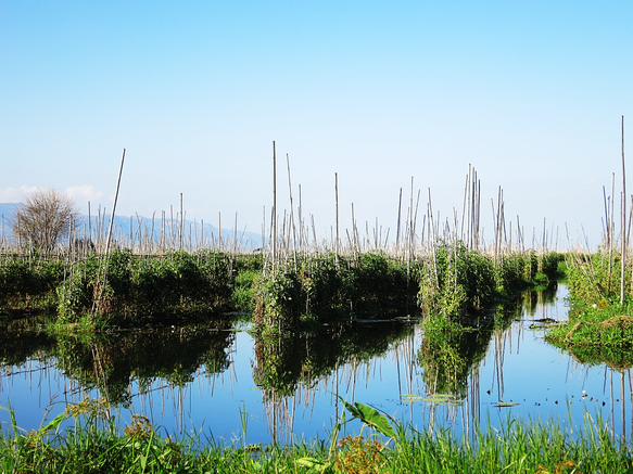 Die Schwimmenden Gärten auf dem Inle-See