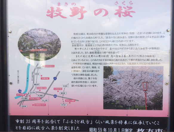 牧野公園 牧野の桜(筆者撮影)